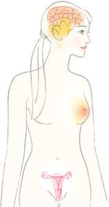 女性の体内